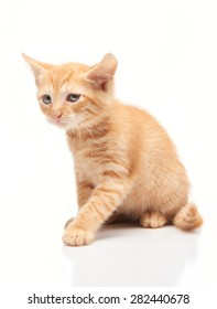 Sad little red kitten isolated on white background