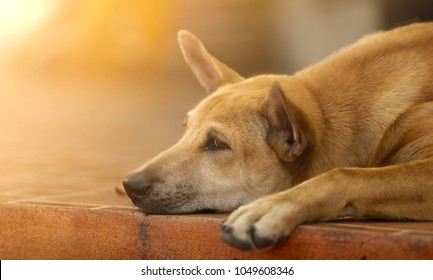 Sad and lonely dog laying down on floor.