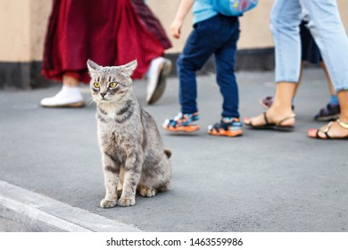 sad lonely gray homeless cat sits on an asphalt road and looks longingly at the sides, and behind people's feet go indifferently and do not notice him