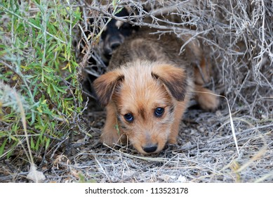 Sad lonely homeless puppy looking in the eyes