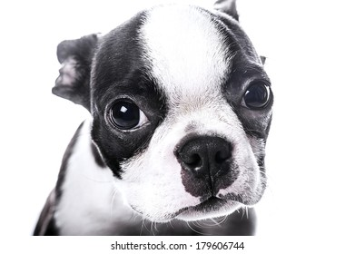 Sad look puppy