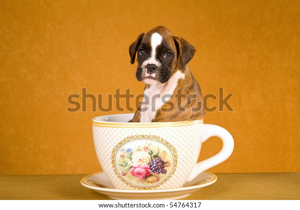 Sad Looking Boxer Puppy Sitting Large Stock Photo Edit Now 54764317