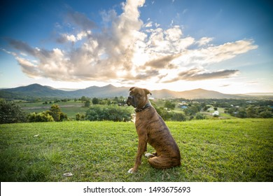 Sad looking mastiff in front of amazing sunset with blue and green colours