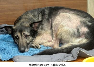 sad miserable dog