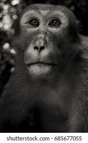 Sad monkey