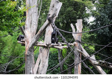 sad monkey in the zoo sits on a tree