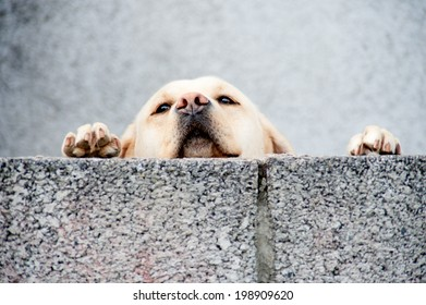 sad neglected dog looking over wall