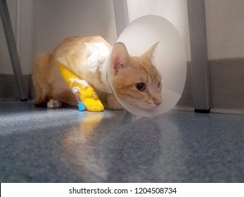 Sad orange kitty at veterinary office with plastic cone and bandaged leg