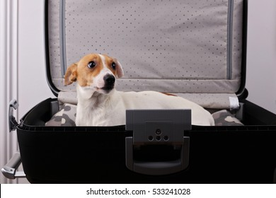 Sad pet dog in suitcase want to go with family on vacation