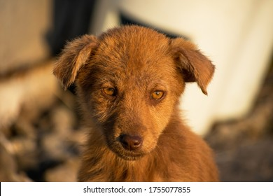 Sad puppy, abandoned on the outskirts of town. The puppy is scared. Stray puppy. Portrait.