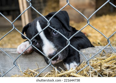 Sad puppy in cage waiting for adoption