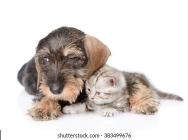Sad puppy embracing tiny kitten. isolated on white background