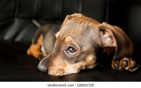 Sad puppy ii