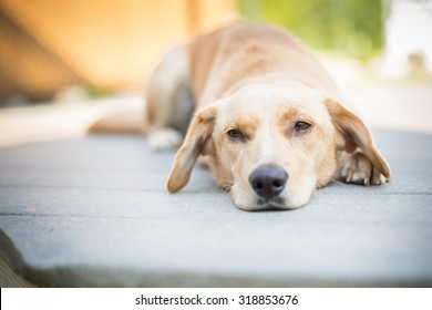 Sad puppy laying down outside