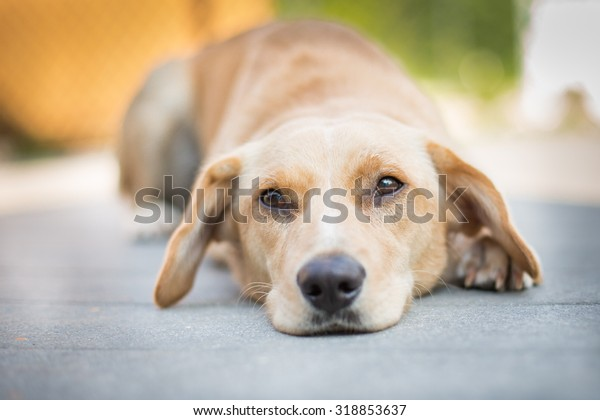 Sad puppy laying down outside on a deck.