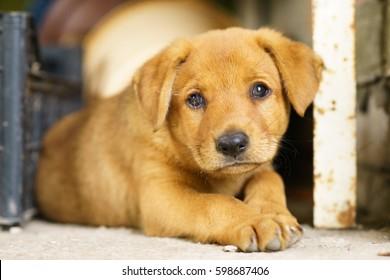 Sad Puppy on concrete