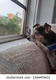 Sad puppy on a rainy day