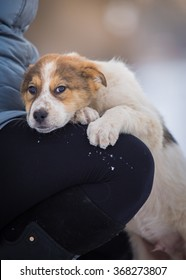Sad puppy paws owner put on his knees