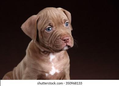 Sad puppy portrait