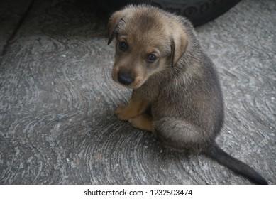 Sad Puppy Real Photo looks at camera