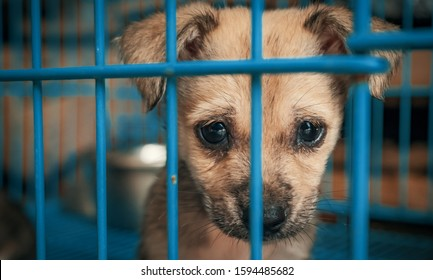Sad puppy in shelter behind fence waiting to be rescued and adopted to new home. Shelter for animals concept