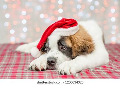Sad saint Bernard puppy in a Christmas hat
