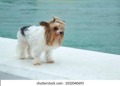 sad salty dog