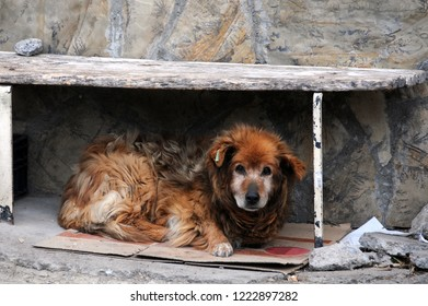 A sad stray dog with identification tag under the bench