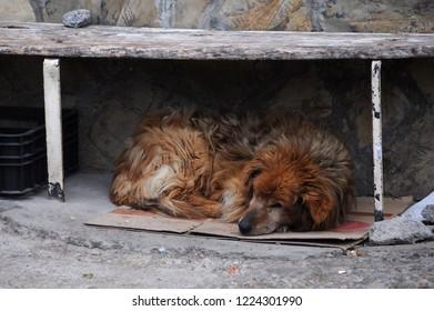 Sad stray dog sleeps under the bench