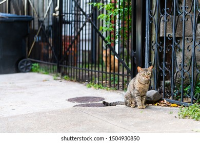 Sad stray tabby cat with green eyes sitting on sidewalk streets in French Quarter of New Orleans, Louisiana by metal fence