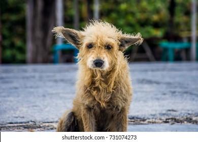 Sad tan scruffy stray dog sitting