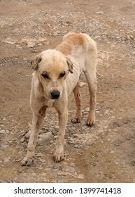 A sad and thin dog in Malaysia that has been neglected and is old
