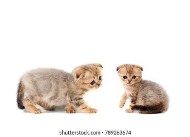 sad very small fluffy kitten scottish fold on white isolated background. With a sore eye that is watering. Weak-demanding cat