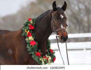 Saddle horse wearing beautiful colorful christmas wreath at advent weekend in the fresh snow