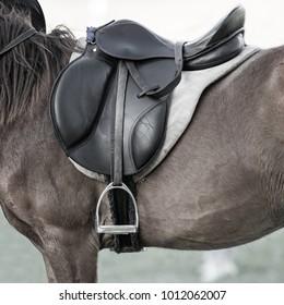 Saddle pads, stirrups, saddles