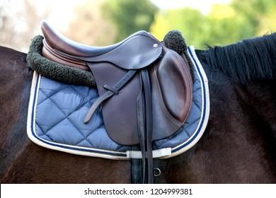 A saddle saddled on the back of a sport horse