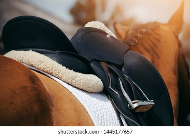 Saddle with stirrups on a back of a horse. Equestrian sport.