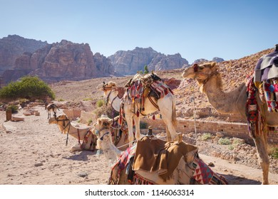 Saddled camels wait standing and crouching for a touristic ride in Petra's famous corridor canyon, in Jordan.