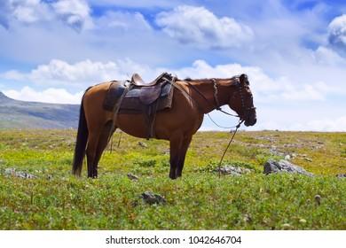 saddled horse against mountains landscape