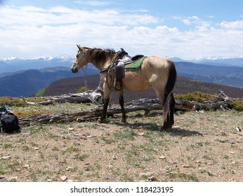 Saddled Riding Horse Standing on the Edge of a Mountain