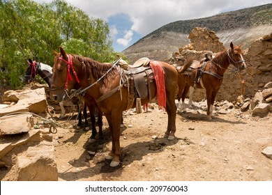 saddled up tour horses waiting for customers in Real de Catorce Mexico