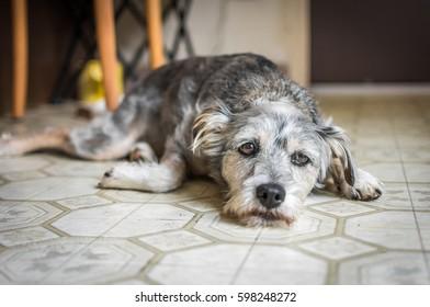 A sad-looking dog lying on the kitchen floor.