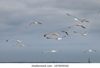 sae gulls flying in norderney germany