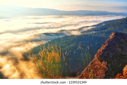 Sae mist landscape on mountain .