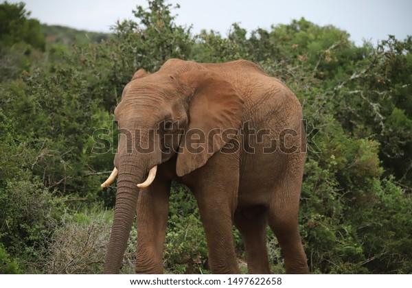 Safari Animals South Africa | Animals/Wildlife, Nature Stock Image