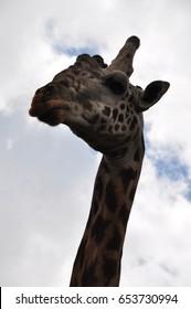 Safari Animals and Wildlife in Kenya, Africa