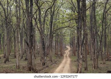 Safari forest trail in Kabini Wildlife Sanctuary , Karnataka, India.