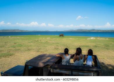 Safari Humans Spotting an Elephant at the Waterhole of Minneriya National Park in Sri Lanka