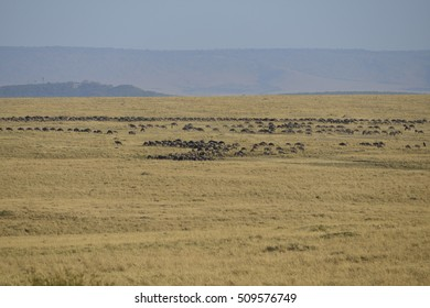 Safari at Kenya