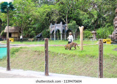 SAFARI MARINE PARK, BALI - JANUARY 8 2017: Instructor interact with Tiger and Elephant in Bali Safari Marine Park Bali which is a zoo, conservatory, and theme park that open for visitors everyday